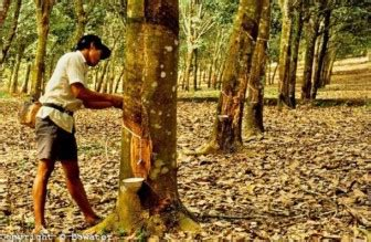 philippines works to increase rubber production global