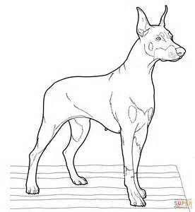 Doberman Coloring Pages Doberman Coloring Page Free Printable Coloring Pages by Doberman Coloring Pages