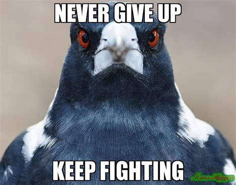 Never Give Up Meme - never give up keep fighting
