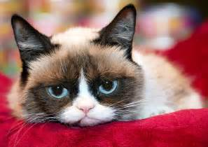 Grumpy cat christmas movie headed to lifetime network us weekly