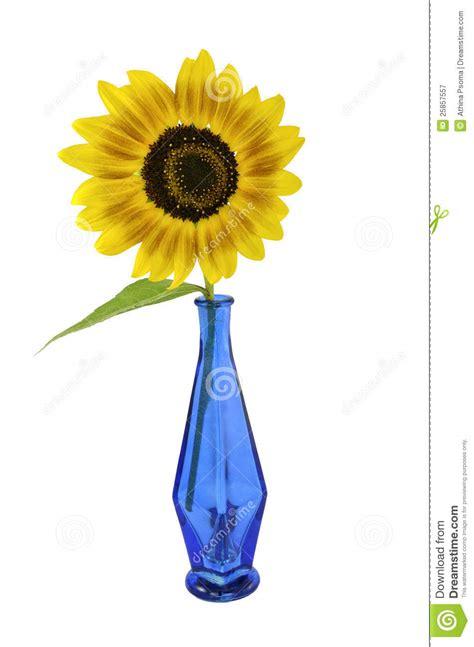 How To Draw Sunflowers In A Vase by Sonnenblume Im Blauen Vase Lizenzfreie Stockfotografie