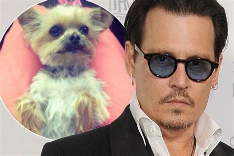 johnny dogs related keywords suggestions for johnny depp dogs