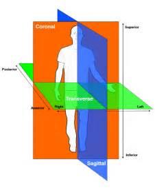 Musculoskeletal anatomy myacsmprep