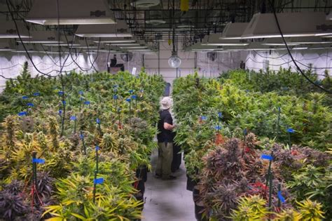Greenhouse Shed Designs building codes amp marijuana processing facilities