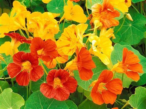 fiori e piante da balcone fiori da balcone piante da terrazzo balconi in fiore