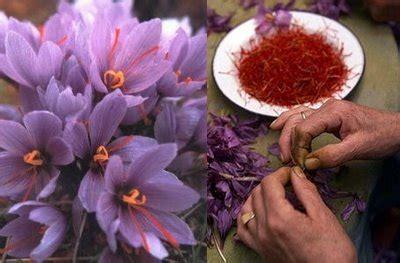 libro la flor del azafrn la flor del azafran la reina del oto 241 o interflora