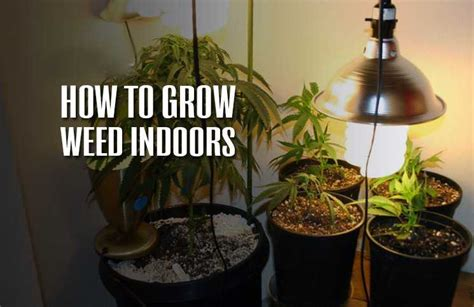 how to a grown how to grow indoors the definitive guide