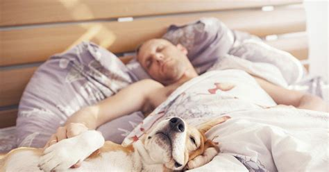 dogs sleeping in bedroom it s official again pets are good for your health