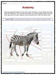 printable zebra facts zebra facts worksheets species habitat information for