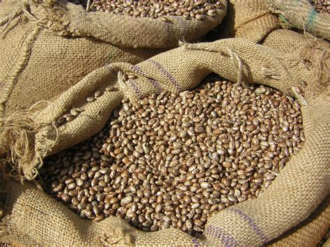 Shelf Dried Beans by Dried Beans Storage Are They Safe From Contamination