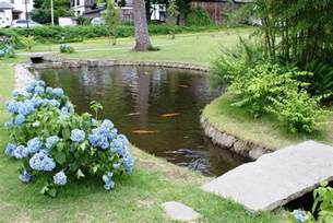 garden pond fish is effectively looked in the water