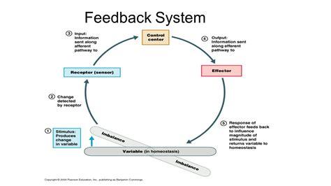 feedback diagram feedback diagram 28 images feedbacks grant wiggins