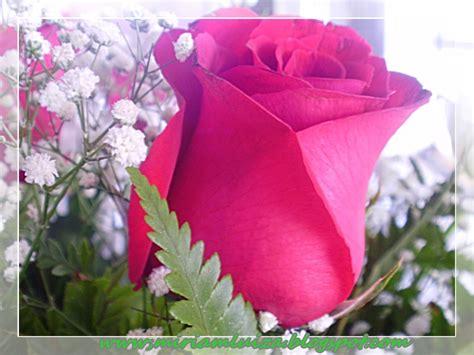 imagenes lindas de flores abrindo o cora 199 195 o flores lindas