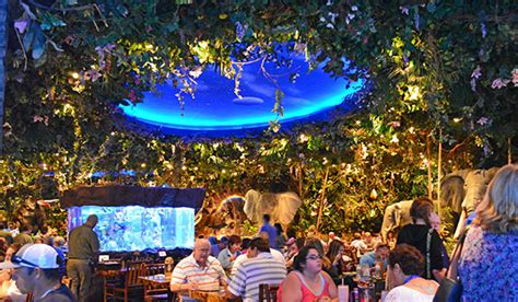 rainforest cafe light up cup orlando insider vacations guide to disney springs in
