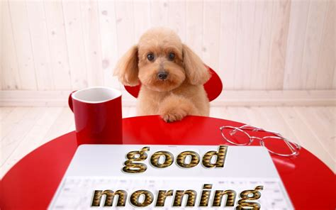 morning puppy morning puppy pictures photos and images for and