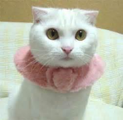 Kalung Cat Lucu kucing lucu banget