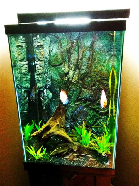 Stocking Designs by Joshmeneses S Freshwater Tanks Details And Photos Photo