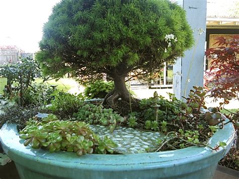 growing wood miniature gardening and bonsai the mini garden guru your miniature garden source