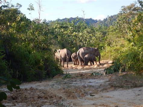 ginting international elephant project