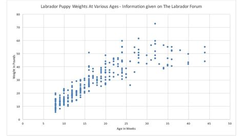 lab puppy weight chart how much should my labrador weigh