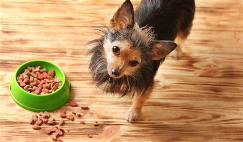 top 10 foods for puppies 10 best foods for small breeds idolbin