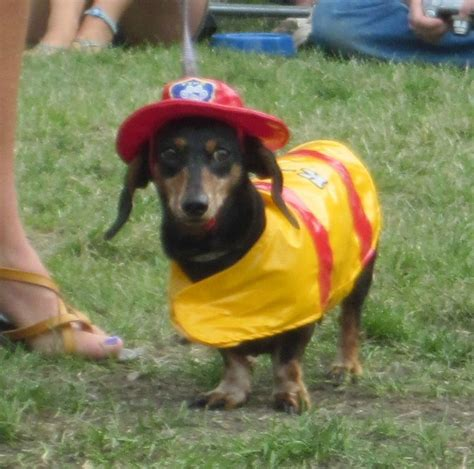 weiner costumes 60 best doxies costumes right images on dachshunds weenie dogs