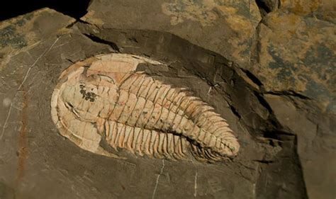 fishing for fossils in the north sea the lost world of doggerland mind blowing discovery fossils of prehistoric sea