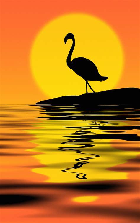 Flamingo Sunset flamingo at sunset by nataly1st on deviantart