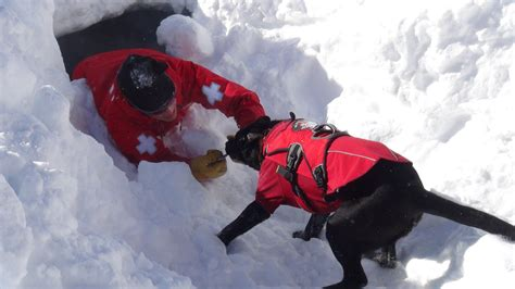 rescue dogs ruffwear attends wbr avalanche rescue school ruffwear news events
