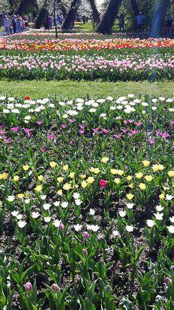 Britzer Garten Review by Britzer Garten Berl 237 N Lo Que Se Debe Saber Antes De