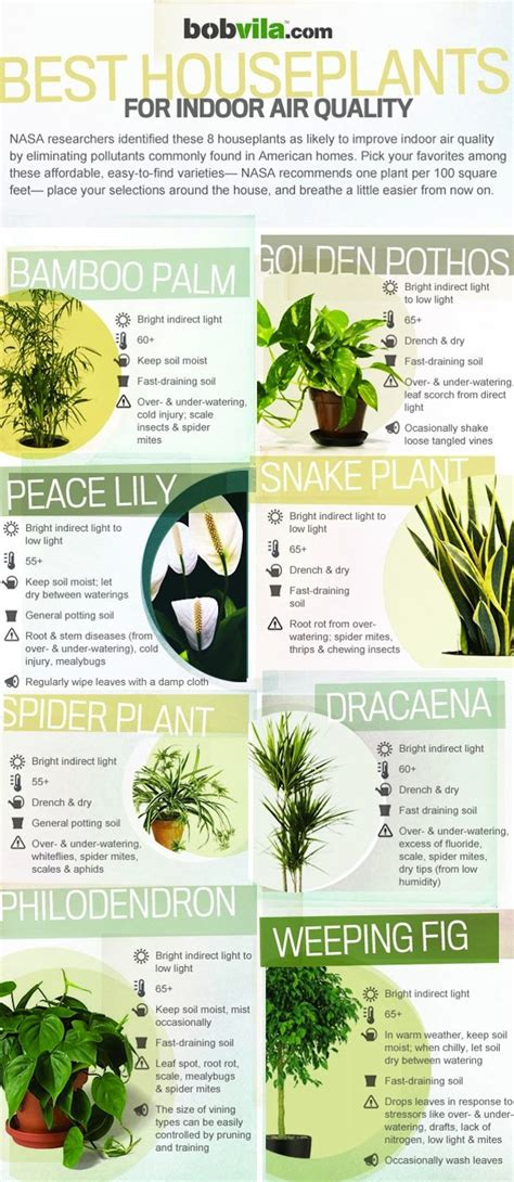 purifying plants nasa guide to air filtering houseplants air purifying houseplants infographic bob vila