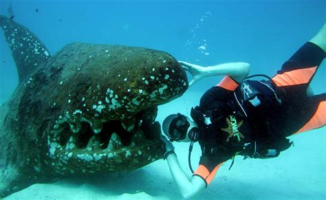 ko tao dive scuba diving on koh tao offers costs thailand redcat