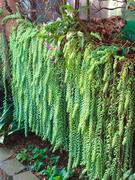 Large Garden Trellis Hanging Around