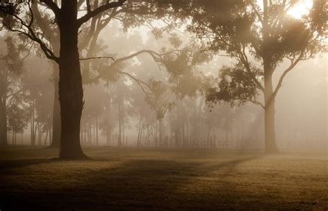picture dawn forest mist tree landscape fog