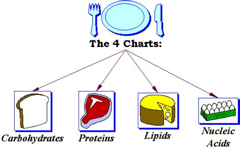 carbohydrates and lipids compare and contrast related keywords suggestions for lipids and carbohydrates