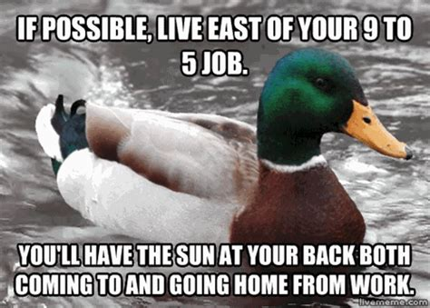 Duck Memes - pin advice duck on pinterest