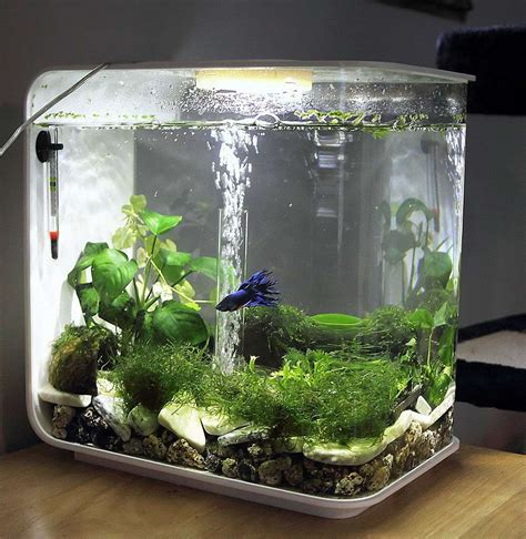 betta aquascape 1000 images about beta on pinterest khon kaen