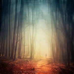 Landscape Light - hazy forest dirk wuestenhagen imagery