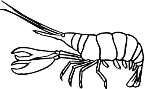 Lobster Coloring Sheet Printable Coloring Pages Lobster Coloring Page