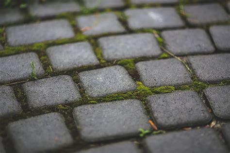 Moos Auf Holzterrasse by Wie K 246 Nnen Sie Moos Dauerhaft Entfernen Im Rasen Und Auf
