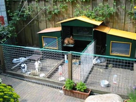 gallery kandang kelinci indoor
