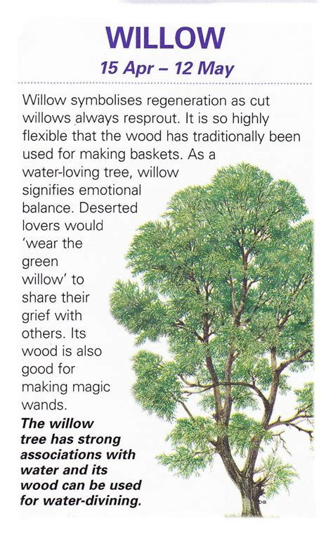 tree meaning 20 best trees images on pinterest celtic tree plants