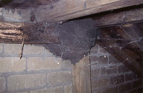 termites in house termite nest in house