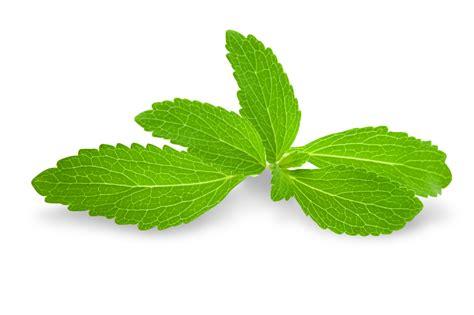 Sugarleaf Sweetener Sachet Gula Sehat Dari Daun Stevia pemanis stevia jom tukar gula kepada pemanis stevia semulajadi pemanis stevia