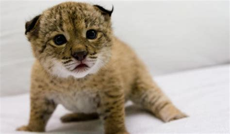 seven adorable animals facing extinction in spain the local