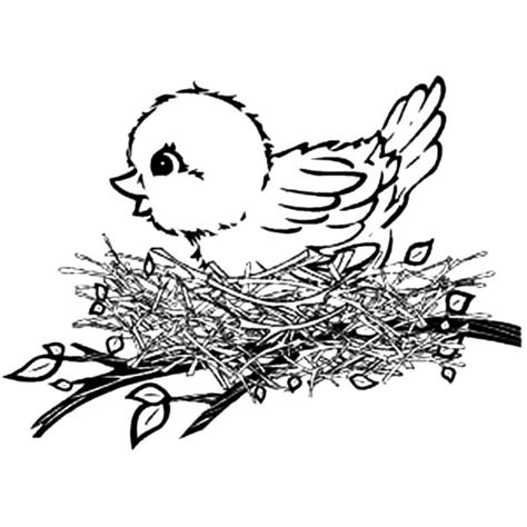 nest coloring coloring pages