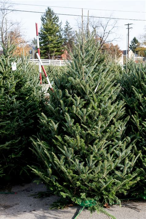 get a real christmas tree venerable trees