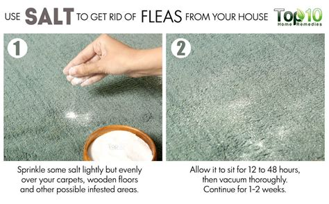 ways to get rid of fleas on hardwood floors