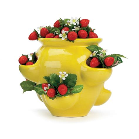 Ceramic Strawberry Planter Pots by Arch Archive