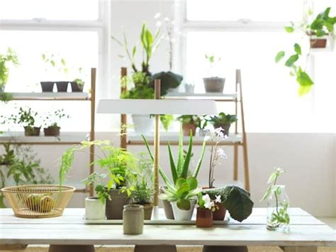 indoor plant design ideas of how to display indoor plants harmoniously